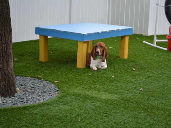 Artificial Grass Photos: Fake Lawn McLoud, Oklahoma Cat Grass, Grass for Dogs