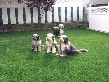 Artificial Grass Photos: Synthetic Lawn Short, Oklahoma Dog Park, Backyard Landscape Ideas